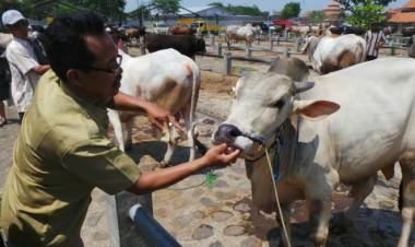 Pastikan Halal, MUI Tangsel Beri Sertifikat Ratusan Juru Sembelih Hewan Qurban