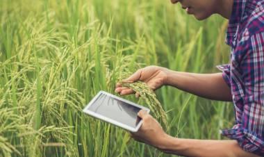 Ini Tiga Jenis Zakat Pertanian dan Cara Menunaikannya